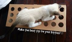 Picture of Make a toy for your cat using cardboard