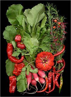 Organic Gardening Sc