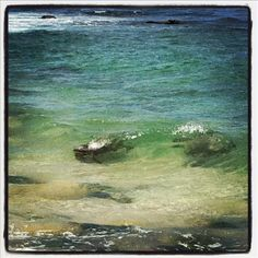 Sea Turtles in turtle bay Hawaii, me and Jenna swam with the turtles