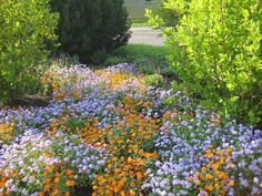 Proven Winners - Basic Design Principles - Using Color in the Garden in How to Plant Garden Design and Home Gardens Dyi Landscaping Ideas, Home Landscaping, Front Yard Landscaping, Backyard Ideas, Colorful Garden, Colorful Decor, Palette Garden, Basic Design Principles, English Country Gardens