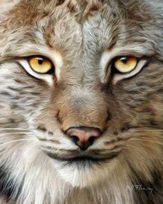 Bobcat by KomodoEmpire.deviantart.com on @deviantART