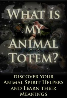 Discover totem animals and their meanings