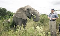 Author and legendary conservationist Lawrence Anthony died March His family tells of a solemn procession (of wild African elephants coming to pay respect/mourn his passing) on March 10 that defies human explanation Wild Elephant, Elephant Love, Elephant Trekking, Herd Of Elephants, Touching Stories, Environmentalist, Game Reserve, African Elephant, Animal Kingdom