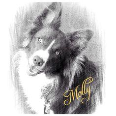 Gorgeous Molly ❤️