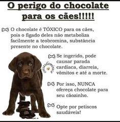 DIGA NÃO AO CHOCOLATE!#filhode4patas  #cachorroétudodebom  #cachorro  #amocachorro #petmeupet