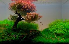 Art of the Week: Aquascapes | Graphic Design Seattle - Quality Web ...