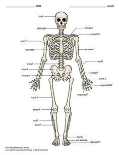 aa1bdaa02a41a6188050b1d10786f3de image of female reproductive system diagram human anatomy drawing