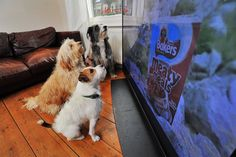 For Weird Animal Question of the Week, we tackle the question of how man's best friend recognizes animals on the tube,…