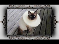 DIY  Halskrause Schutzkragen Leckschutz für Katzen & Hunde - YouTube