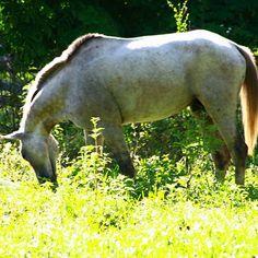 #Horse #Caballo #Llanos de #Apure #Venezuela #igersvenezuela #igersven #instahub #instagood #instamood #instacool #picoftheday #nature
