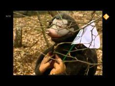 Koekeloere aflevering 519: De leeuw is los