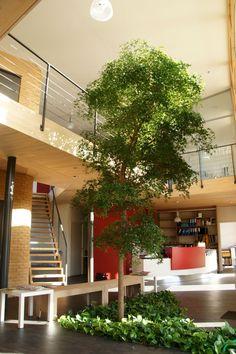 Begrünter Eingangsbereich #baum #pflanzenfreude #indoortree
