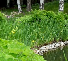 Plants for wet areas, text in finnish Pond Plants, Blacksmith Shop, Yard, Landscape, Vegetables, Cabin, Blacksmithing, Patio, Scenery