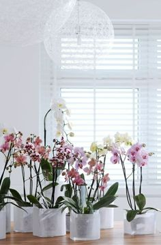 Orchids are not without reason, one of the most popular houseplants and more popular. We give you tips for the care of orchids, and how you can extend the