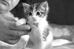 Cute Kittens...sooo precious