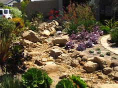 dry climate landscape designs | beautiful dry creek garden with an exciting array of low water use ...