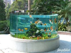 If you are bored with the same old pond in your backyard, you can try backyard aquarium. Discover ideas of backyard aquarium for green house. Goldfish Aquarium, Goldfish Tank, Aquarium Fish Tank, Fish Aquariums, Goldfish Bowl, Saltwater Aquarium, Aquarium Design, Home Aquarium, Aquarium Ideas
