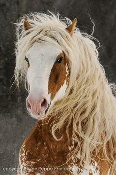 Blonde Horse Celebrate the power and majesty of the horse with horse and Equestrian jewelry at http://www.silveranimals.com/