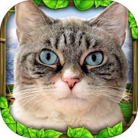 Stray Cat Simulator by Gluten Free Games Cat Simulator, Software Apps, Best Android Games, Dangerous Dogs, Alley Cat, Unique Cats, Animal Control, Snow Leopard, Cat Breeds