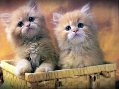 baby animals images | Cute Baby Animals : Cute Babies