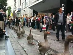 If you ever need a good laugh...just remember there are goose parades in Belgium!
