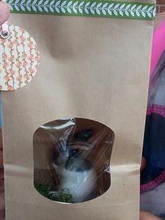 A bunny for the teacher!