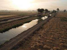 テーベ西岸の畑