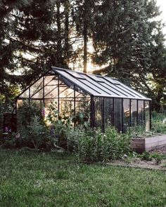 Organic Gardening Supplies Needed For Newbies Oh This Morning Light Evergreen Climbing, Evergreen Vines, Above Ground Pool Decks, In Ground Pools, Luxury Garden Furniture, Vegetable Garden Design, Outdoor Living Areas, Outdoor Settings, Morning Light