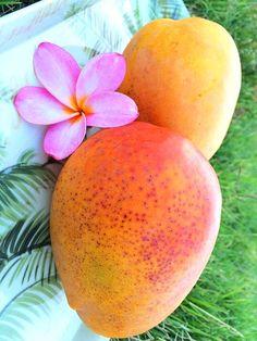 Plumeria (& Mango)