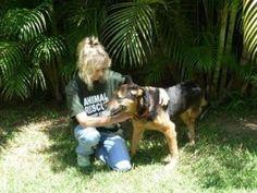 Australian Dream Brings Hope for Homeless Dogs in Brazil