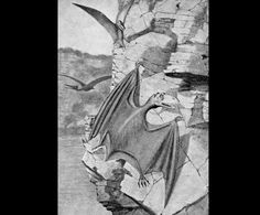 Pterodactyls - Early Images of Dinosaurs and Prehistoric Animals for Schools, Crafts, Teachers, Parents and Children