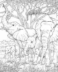 Elephants and Leopard Elephant Coloring Page, Horse Coloring Pages, Doodle Coloring, Colouring Pages, Adult Coloring Pages, Coloring Books, Coloring Sheets, African Drawings, Wood Burning Patterns