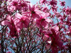 Biltmore Estate - Festival of Flowers