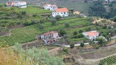 Vineyard view as seen from the Hotel Douro Scala, near Peso du Regua, Portugal. Courtesy Worldwine Marketing.