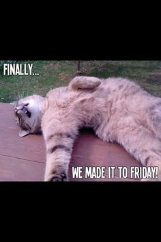٩(^ᴗ^)۶ Share funny happy friday meme images from this post to celebrate weekend days. get relief from work stress (best meme collection) Memes Humor, Jw Humor, Work Humor, Funny Shit, Funny Cats, Funny Animals, Hilarious, Jw Funny, Weekend Quotes