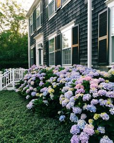 """queen-ghold: """" oceaniclace: """" anantucketsummer: """" Turn left at the grey house w the white trim and blooming hydrangeas #nantucket #anantucketsummer """" oceaniclace """" X """""""