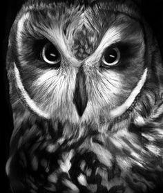owl_by_kayleighmc-d5bi00u.jpg 400×474 pixels