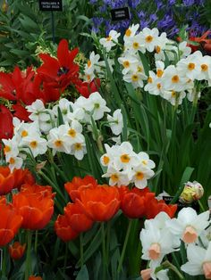 Figuring out bulb types means understanding their planting needs.