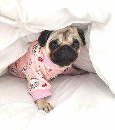 #pug #bed #sleep