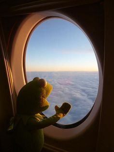Kermit has a window seat