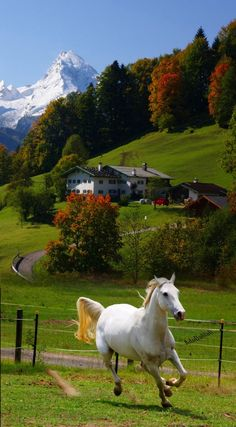 48 Ideas country landscape photography farms beautiful for 2019 Pretty Horses, Horse Love, Beautiful Horses, Animals Beautiful, Beautiful Places, Beautiful Beautiful, Beautiful Scenery, Beautiful Nature Wallpaper, Beautiful Landscapes