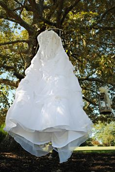 My dress hanging in the trees