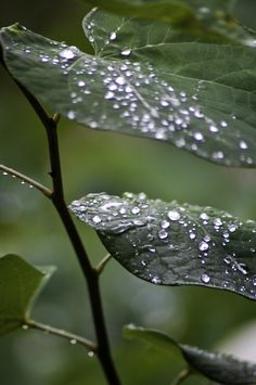 one of my favorite parts of spring = dew drops on everything in the morning