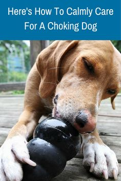 Would you know what to do if something was stuck in your dog's throat? Read this and share with a friend so you both can be prepared.