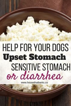 Dog Biscuit Recipes, Dog Treat Recipes, Healthy Dog Treats, Dog Food Recipes, Food Tips, Cooking Tips, Dog Has Diarrhea, Diy Pet, Food Dog