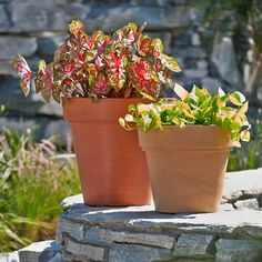 Enjoy a beautiful container garden -- even in shade. Check out this collection of recipes perfect for spots that don't see full sun. Plant Pots, Potted Plants, Garden Plants, Flower Planters, Flower Pots, Flowers, Space Saving Storage, Create Space, Container Gardening
