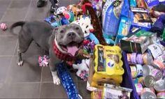 Cães de abrigo ficam muito felizes enquanto escolhem presentes em Árvore de Natal - Portal do Dog