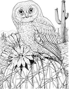 Mexican Spotted Owl On Cactus Coloring Page
