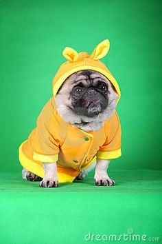 Hello... I am wearing my new Easter rain suit!