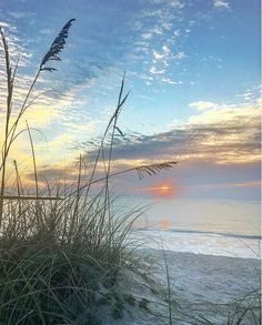 Beautiful beach and sea oats. Beautiful beach and sea oats. The Beach, Ocean Beach, Beach Sunsets, Landscape Photography, Nature Photography, Beach Scenes, Beach Pictures, Beautiful Beaches, Beautiful Landscapes